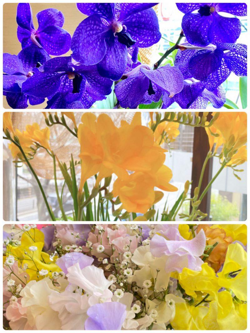 春を感じます〜(*´꒳`*)