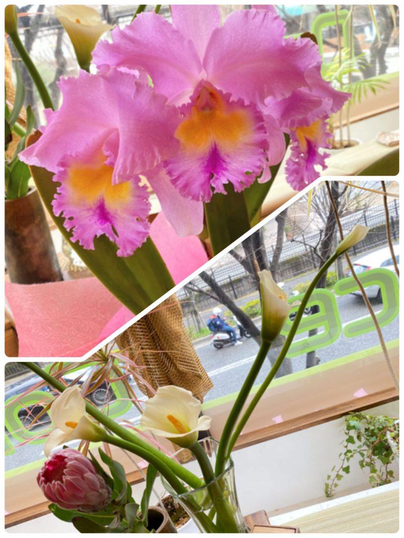 春を感じます〜(*´꒳`*)第二弾!